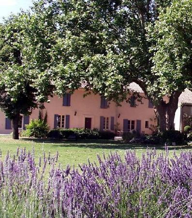 Domaine de Bournereau: Wunderschöner Garten mit uralter Platane