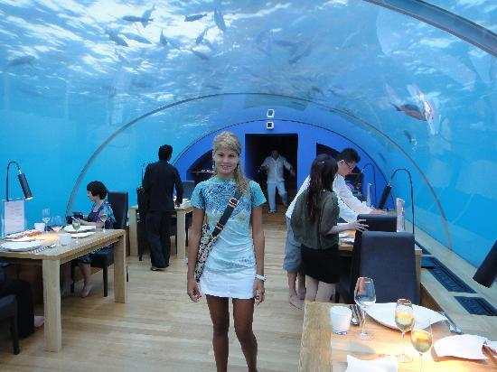 Restauran undersea ithaa picture of conrad maldives for Ithaa prices