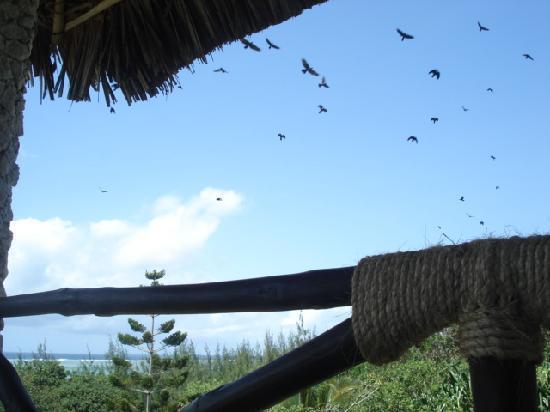 Tijara Beach: birds