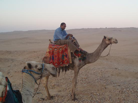 Real Egypt Day Tours: Our early morning camel ride