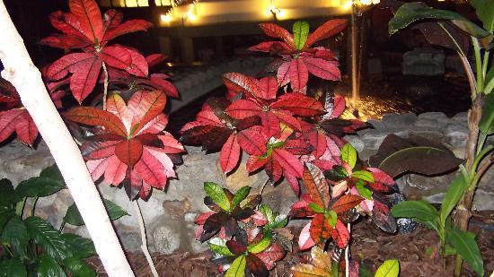 The Boxboro Regency: flowers