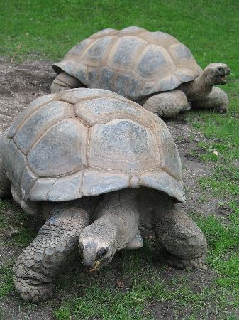Tierpark Hagenbeck: Tortoise