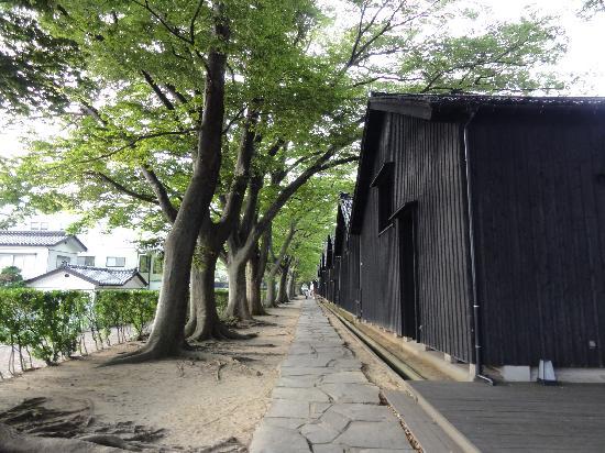 Sakata, Japon : ケヤキ並木