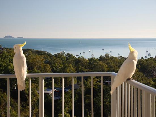 Grand Mercure Azure Sea: Besuch vom Kakadu