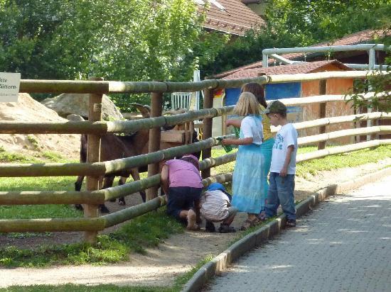 Ferienpark Glocknerhof: Ziegen fuettern