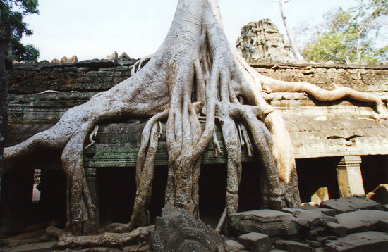 Angkor Archaeological Park: Ta Prohm temple