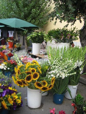 Sis Pins: local market
