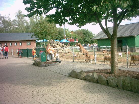 Wild- und Freizeitpark Klotten Cochem: Streichelzoo