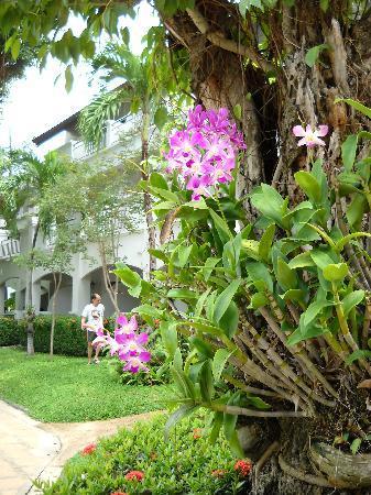 Pinnacle Grand Jomtien Resort: l'immense jardin