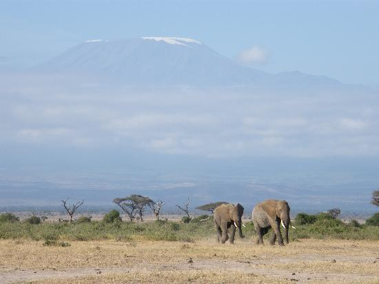 Amboseli Sopa Lodge: mount kilo