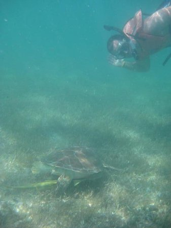 Snorkeling with Sea Turtles with Edventure Tours
