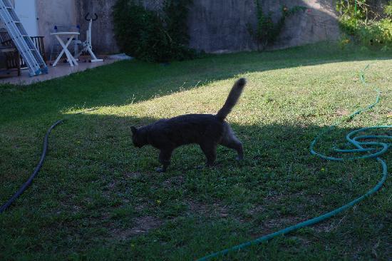 Chambre d'hotes Padovani Sylvie : Un des nombreux chats errants pssant devant notre chambre