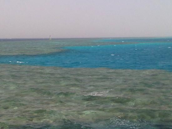 Charmillion Gardens Aqua Park: One of the 3 reefs we snorkelled at on our boat trip
