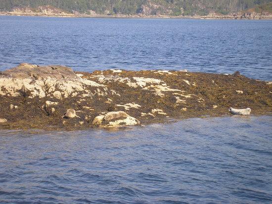 Plockton Seal Trips