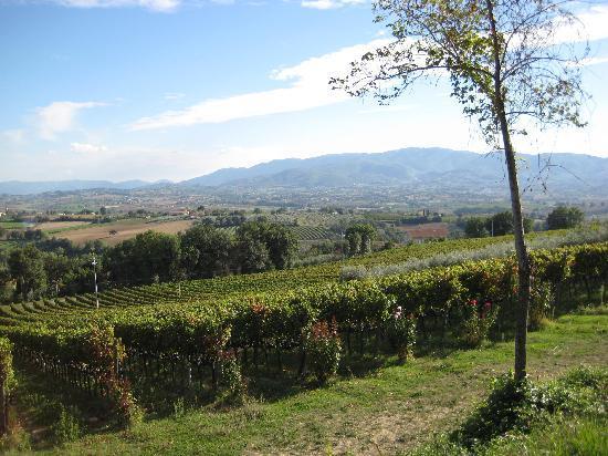 Montefalco, อิตาลี: Gorgeous Umbrian vistas