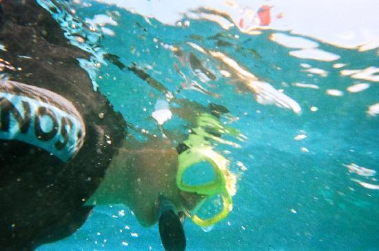 Reef Experience: Diver Dan.