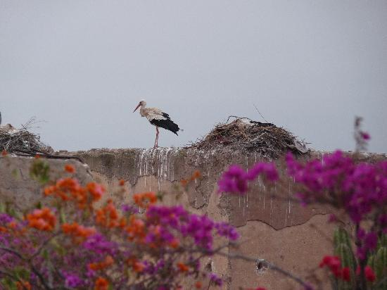 Riad Assalam : Observez les cigognes depuis la terrasse !