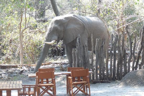 andBeyond Sandibe Okavango Safari Lodge: les éléphants envahissent le lodge