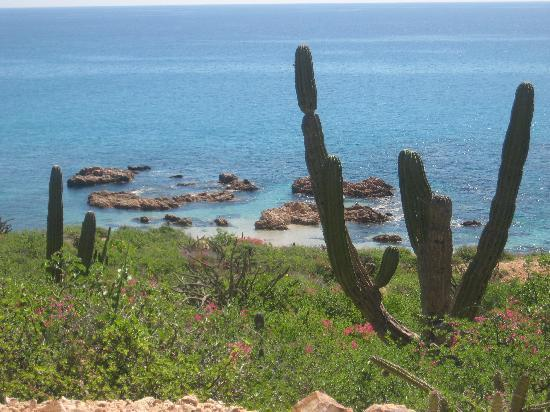 Punta Pescadero Paradise: good snorkeling, just south of the hotel