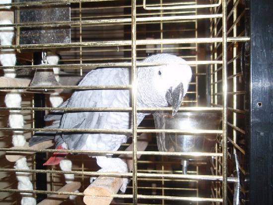 Hostellerie du Baron des Adrets : PhiPhi