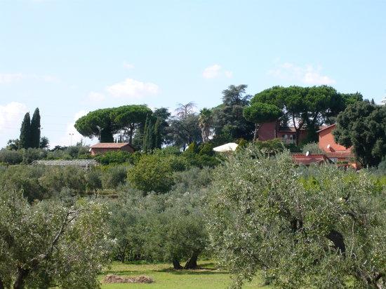 Genzano di Roma, Italia: Agritursimo La Selvotta