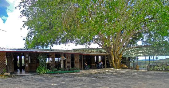 Barranquitas, Puerto Rico: El Coqui Here Restaurant