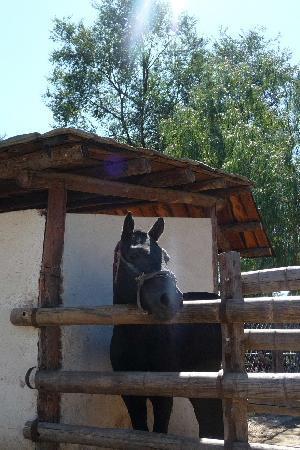 Xiangjulou : Pony walks for 30rmb