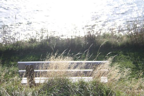 Seascape Coastal Retreat: A quaint bench to enjoy the view.