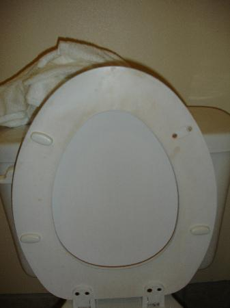 Quality Inn: toilet seat