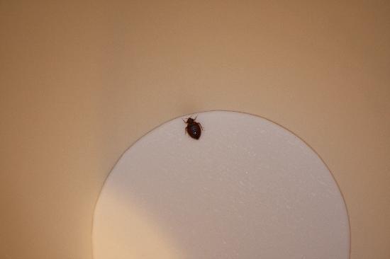 Travelodge Page : bedbug we caught