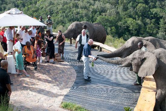 Knysna Elephant Park Lodge: ellies