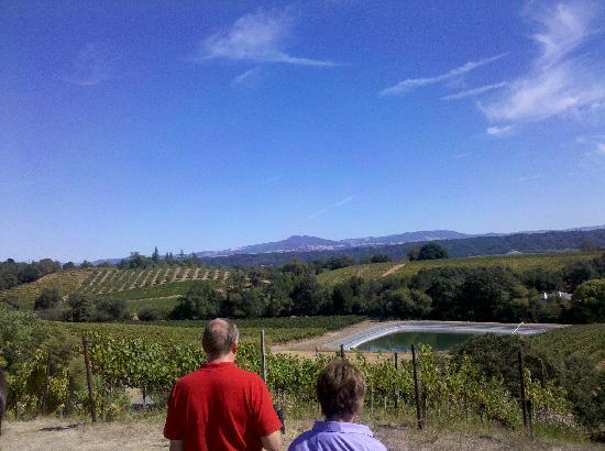 Michel-Schlumberger Wines: view
