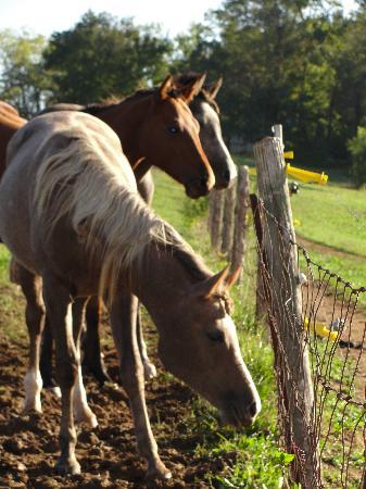 West Ridge Guest House: horses on property