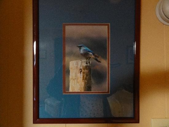 Bluebird Motel: The Bluebird