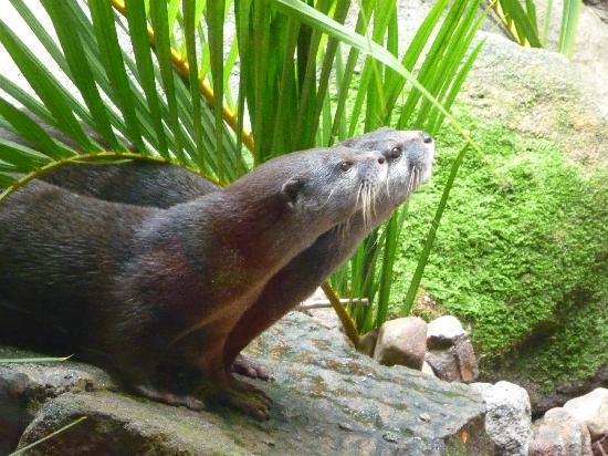 Australia Zoo: Otter show