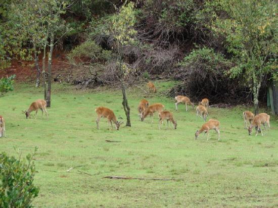 Parque Jaime Duque : encierro de venados