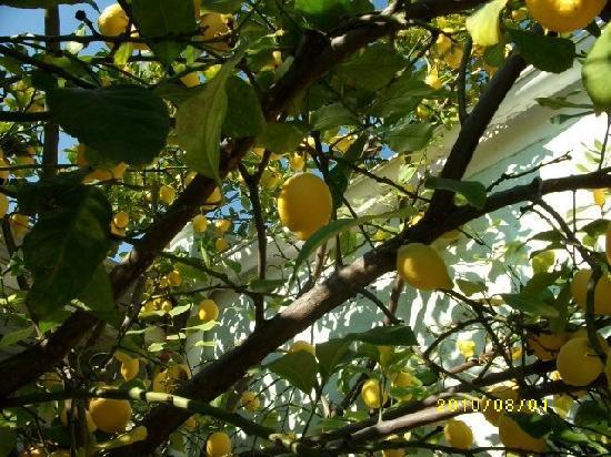 Adley House : Beautiful garden