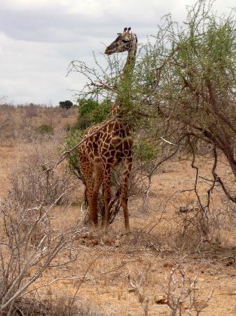 Sandies Tropical Village: safari allo tsavo...