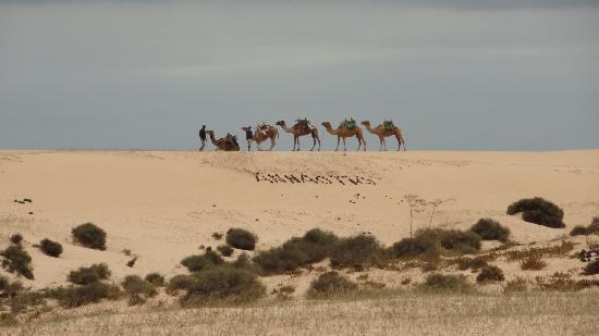Camellos fotograf a de fuerteventura islas canarias tripadvisor - Jm puerto del rosario ...
