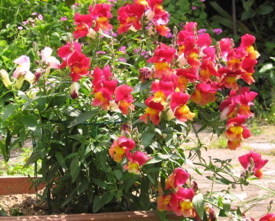 B&B Le Coq: fiori