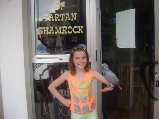 Helen's Tartan Shamrock : shannon and jinky