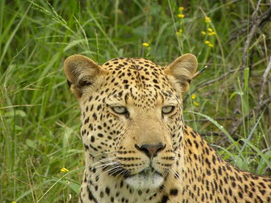 Cape Team Tours - Day Tours: Namibia