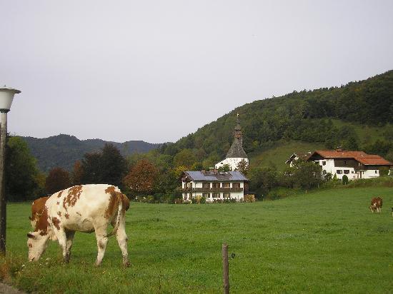 Hotel Gablerhof: Friendly neighbourhood cow in field next door