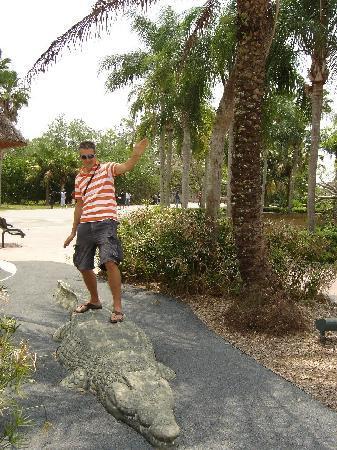 Zoo Miami: Krokodilsurfen