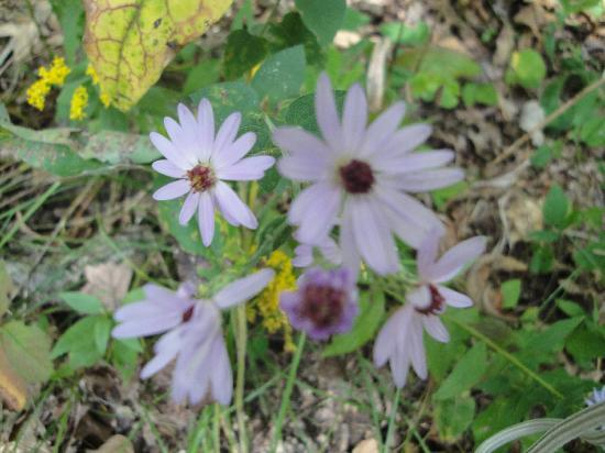 Effigy Mounds National Monument: Beautiful flowers near the walking path