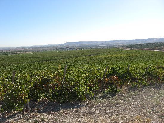 Vinophoria Day Tours: More vineyard!