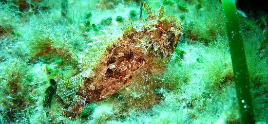 Ponza Island, إيطاليا: altri pesci