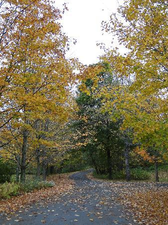 Twin Farms: Lovely walk to breakfast with fall foliage