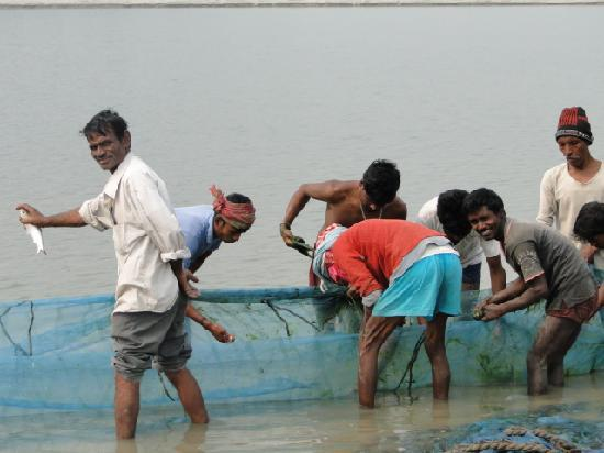Brahmaputra River: Fishermen with their catch