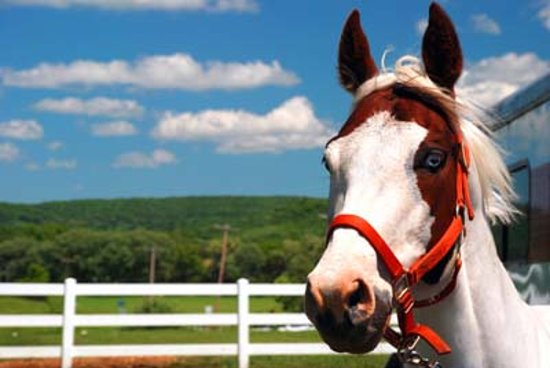Painted Bar Stables: Maximum Review looking forward to going on a trail ride!